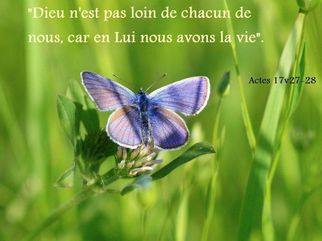 Top Verset Biblique: Actes 17v27-28 | à la gloire de jésus-christ US45